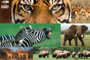 Parc de loisir, dauphins, zèbres, tigres, éléphants, gite, Pays de Retz