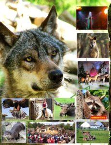 Parc de loisir, Pays de Retz, Loups, Daims, Cerfs, rapaces, gites